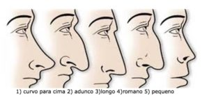 tipos de nariz - ess