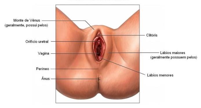 ninfoplastia, cirurgia intima, dr Marco Longo, ninfoplasty, cirurgia plástica intima, labioplastia, lift de grades lábios, anatomia da mulher, anatomia feminina